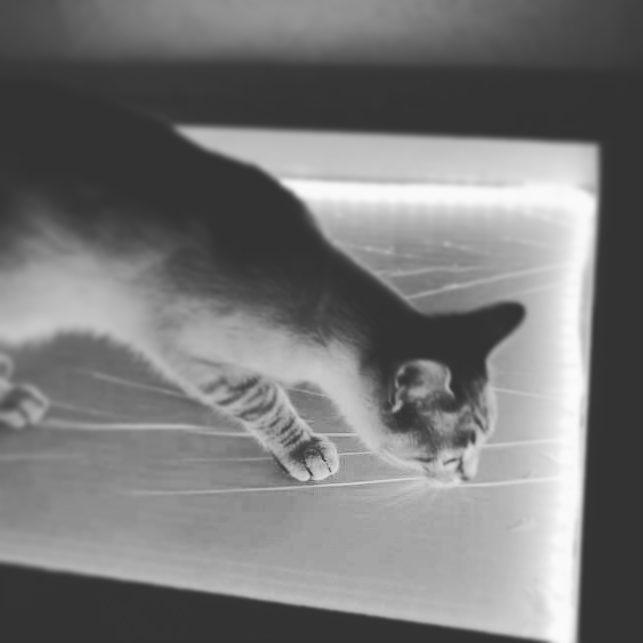cat on interactive lighitng led box